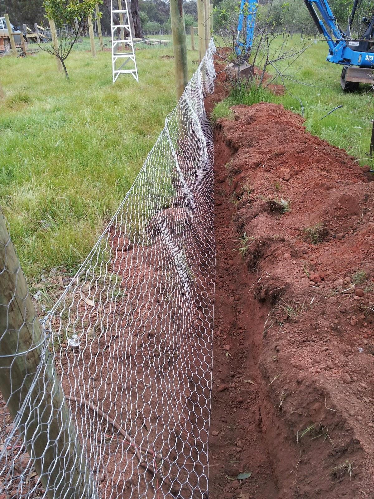 Pretending to Farm: Building a Fox Proof Chicken Coop