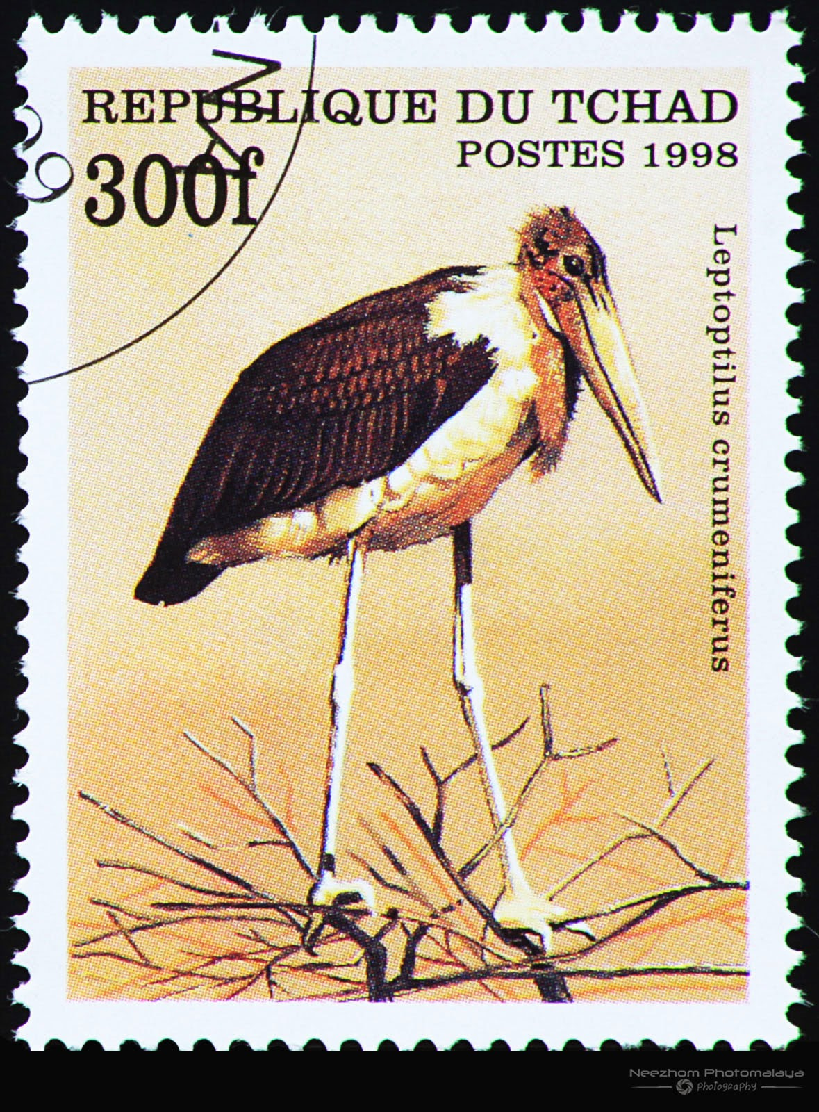 Chad 1998 Birds stamp - Marabou Stork (Leptoptilus crumeniferus) 300 f
