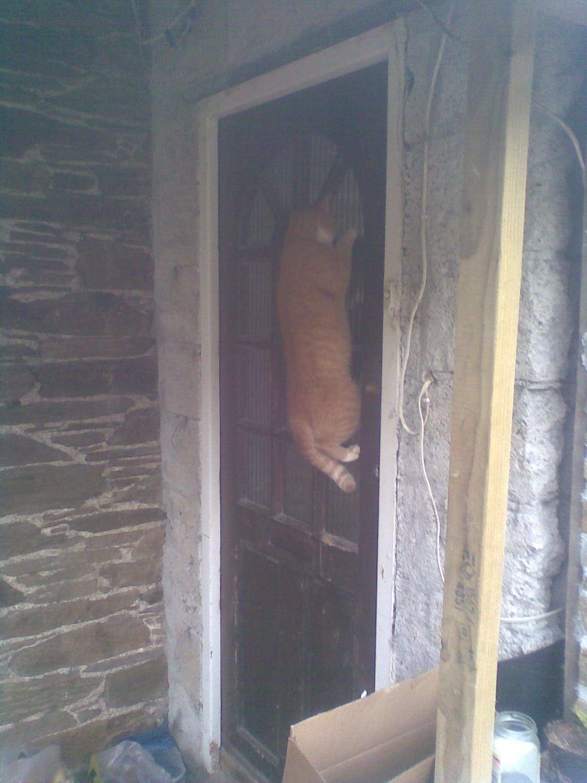 Фото котов: кот лезет на дверь