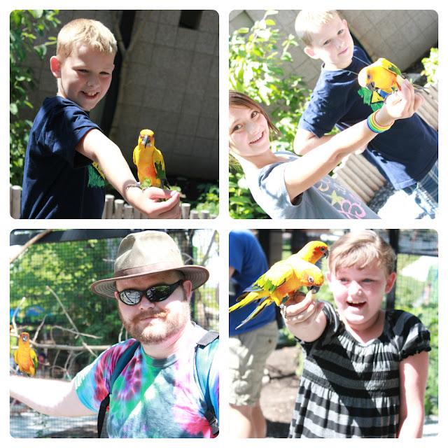 Family visit aviary, aviary, bird aviary, bird zoo visit, sun conures, feed wild birds,