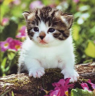 Tips Merawat Kucing bagi Pemula