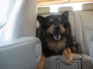 "Mika:  ""Yay!  Road Trip!""- image by lb for linenandlavender.net - http://www.linenandlavender.net/p/much-love-for-our-mika-girl.html"