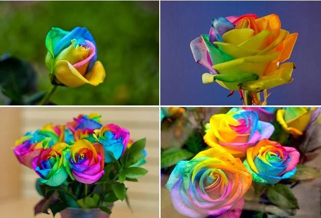 no rainbow no roses