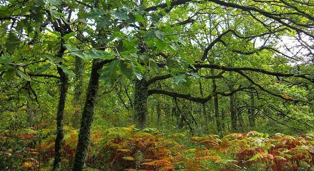 Sotobosque y biologia de los ecosistemas
