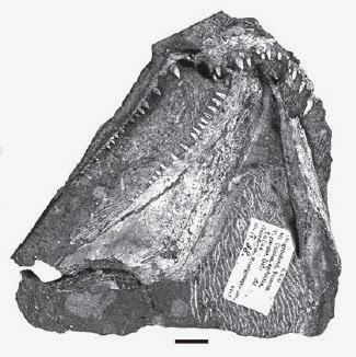 http://sciencythoughts.blogspot.co.uk/2013/01/new-species-of-devonian-tetrapod-from.html
