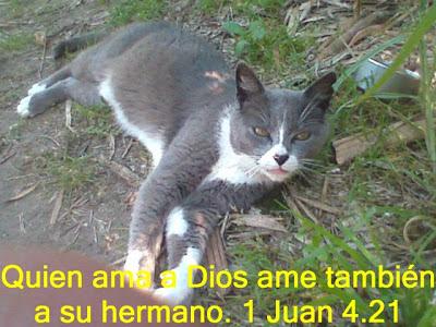 Quien ama a Dios ame también a su hermano.1 juan 4.21