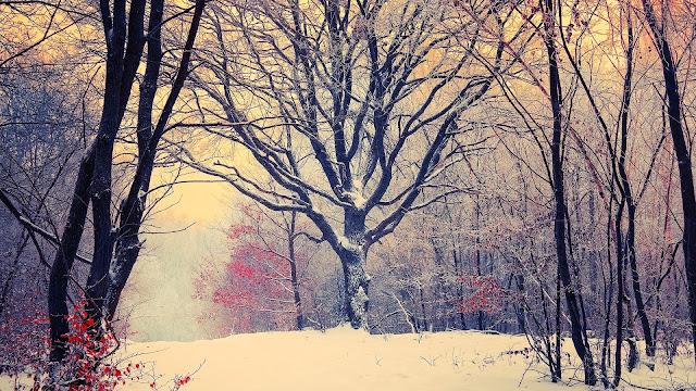 Hình nền tuyết trắng mùa đông đẹp nhất