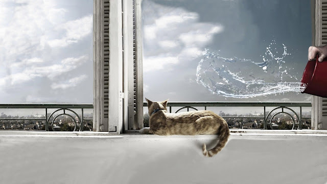 city life, domestic cat, splash, water wallpaper