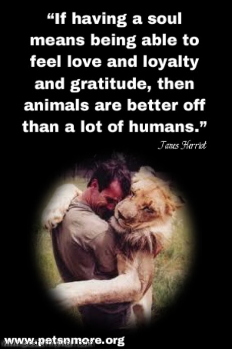 Funny Quotes Animal Lovers : animal, dog, cat, pet, animal, inspiring quotes for animal lovers ...
