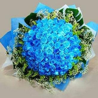 Blue Rose Flower Wallpapers
