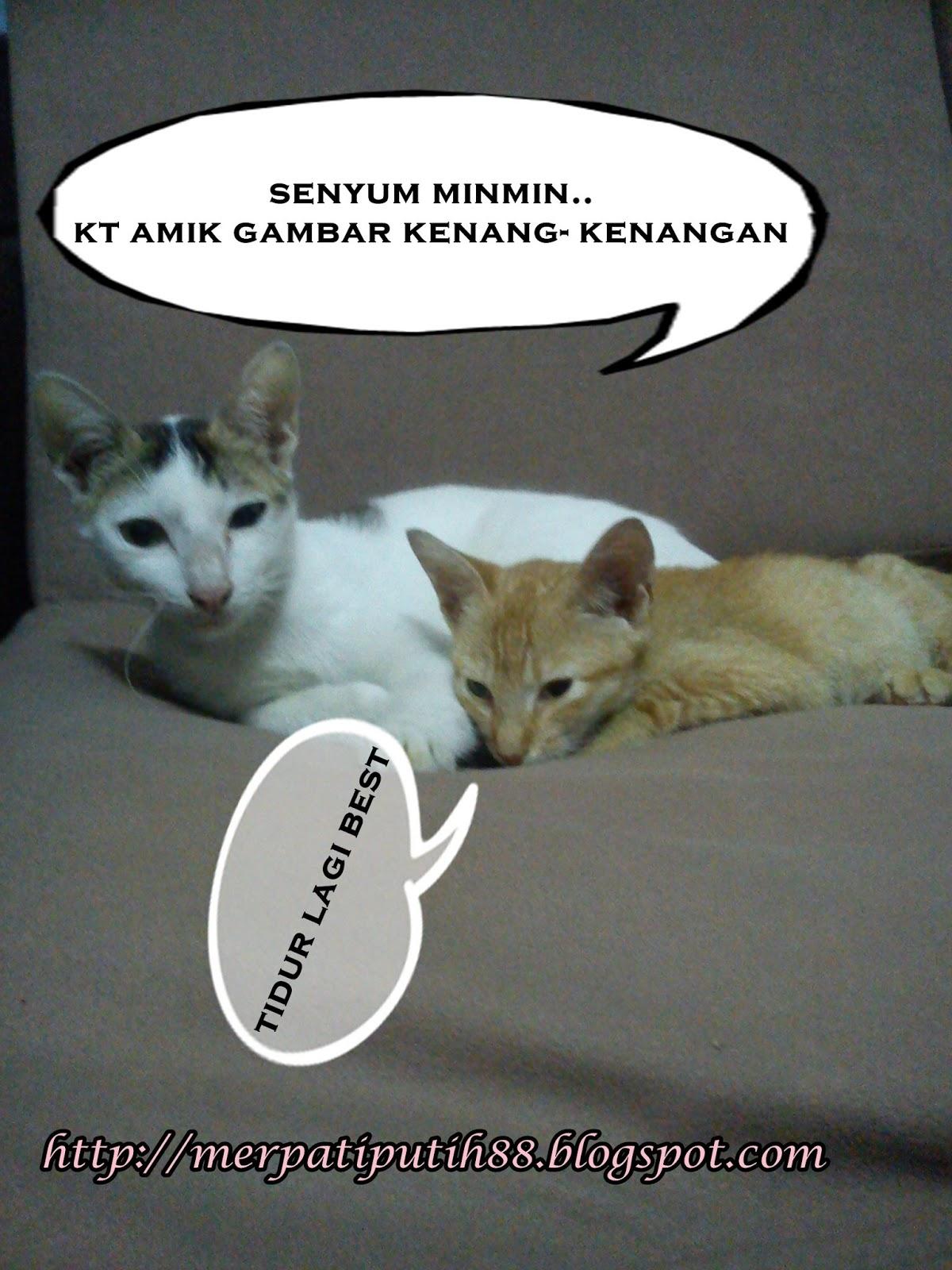 Gambar Kucing Muka Orang godean.web.id
