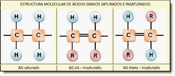 Estructura molecular de ácidos grasos saturados e insaturados
