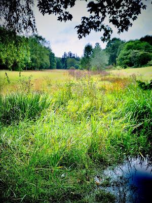 pond,