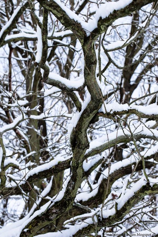 #winterlandschaft, #Schnee, #Baum, #winter