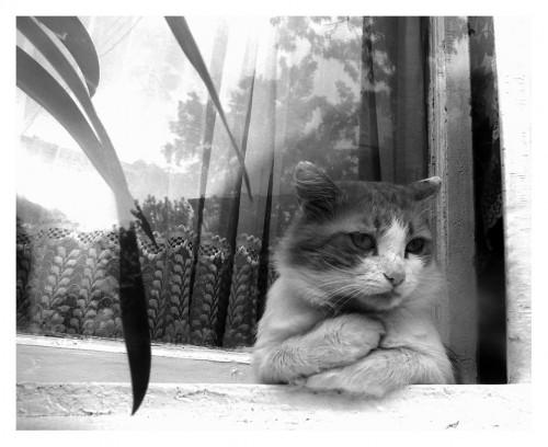 Check It Out Foto Foto Kucing Lagi Galau Bukan Editan