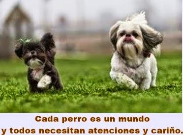 MUNDO: Perros de raza pequeña, cinco cuidados para ellos
