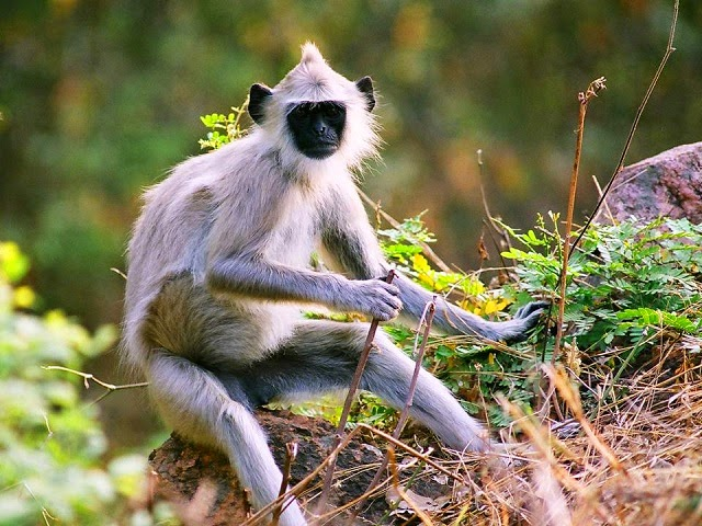 Chinnar Wildlife Sanctuary in Munnar