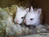 Conejos Debes cuidarlos