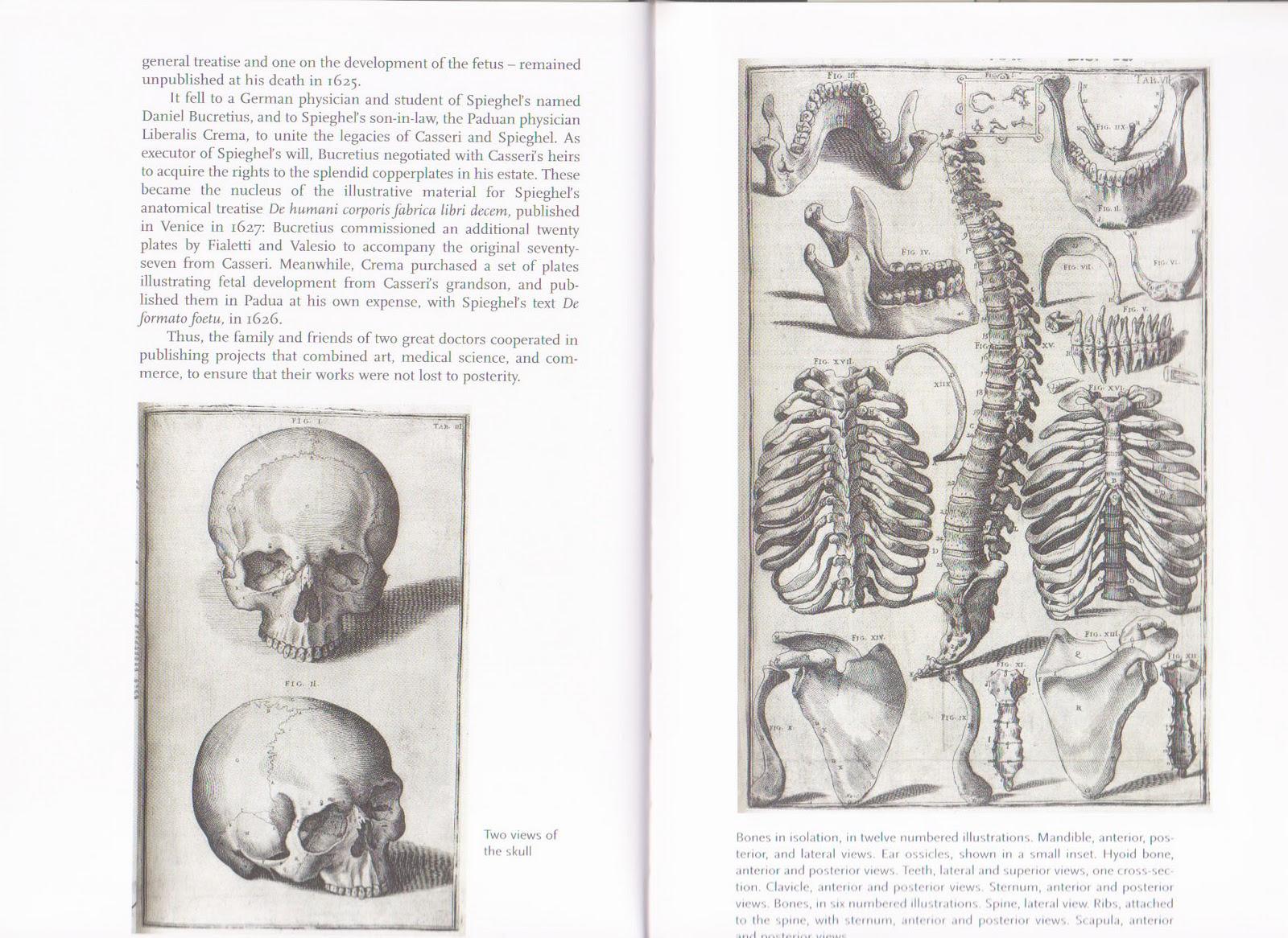 http://1.bp.blogspot.com/-Azk7j-s_k8s/TVg2XkMpHdI/AAAAAAAAAL0/haTg23pFB6k/s1600/Human+Anatomy.5.jpg