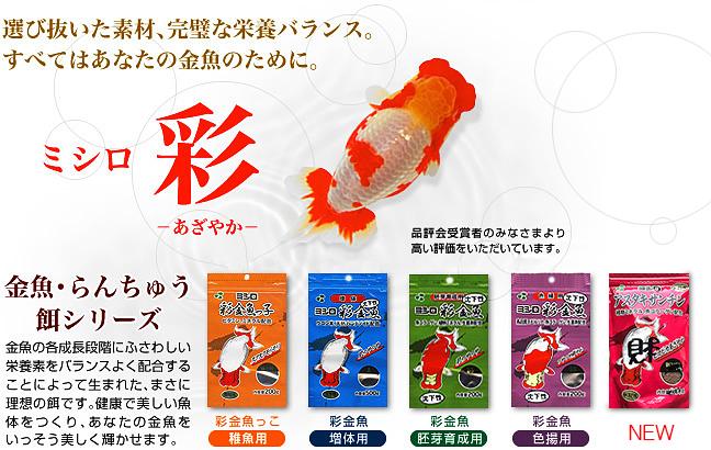 High ranchu azayaka brand ranchu food for Japanese koi fry for sale