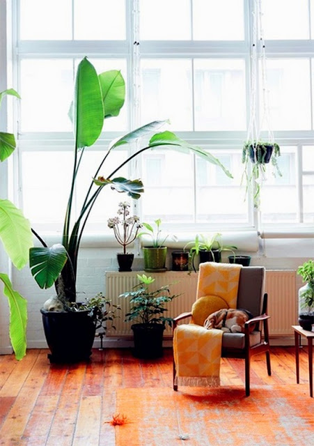 blog deco idees decoration plantes dans salon