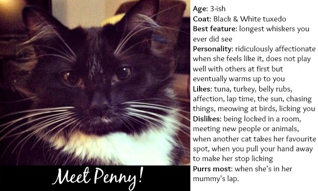 I love cats dating profile