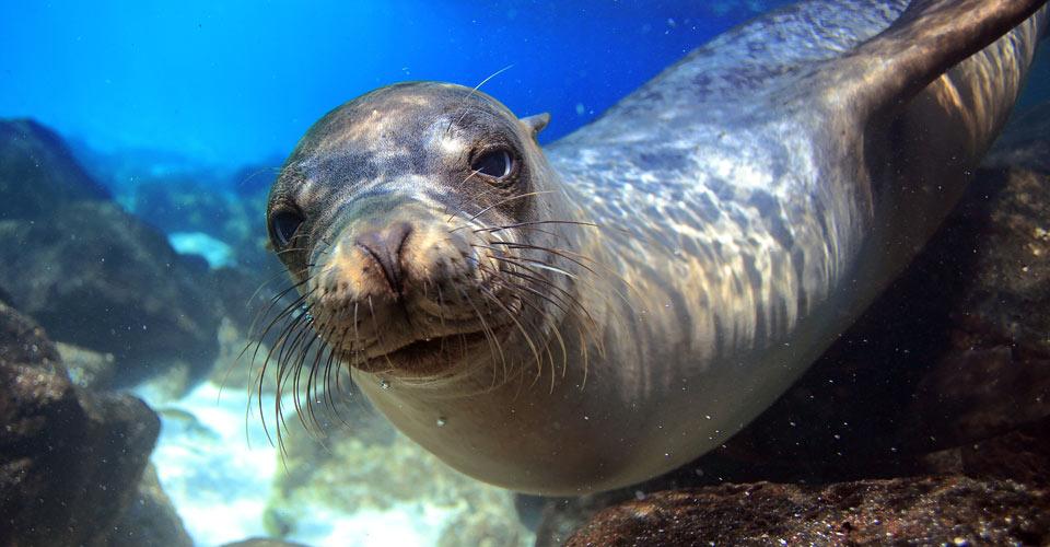 Galapagos GLBT Tours