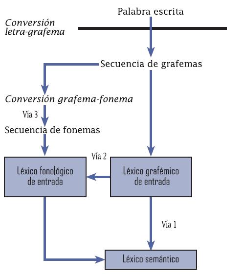 El acceso al l xico sem ntico lectura en voz baja y la for Significado de la palabra beta