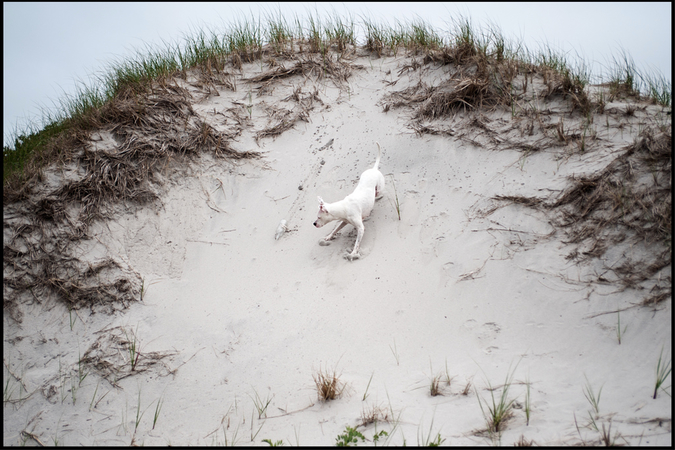 Ezra Caldwell's photos of his dog Putney Sue in Nova Scotia.