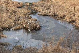 photo of a small pond covered with ice