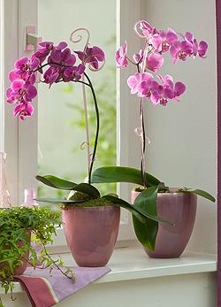 El blog de nitya orquideas las mas bellas de la fiesta for Vasi per orchidee ikea