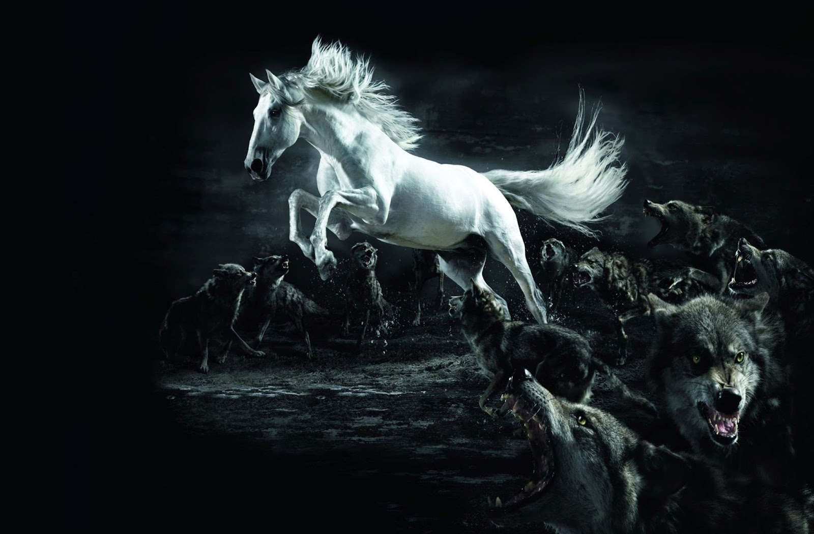 Most Inspiring   Wallpaper Horse Halloween - wxp%2B(21)  Snapshot_266869.jpg
