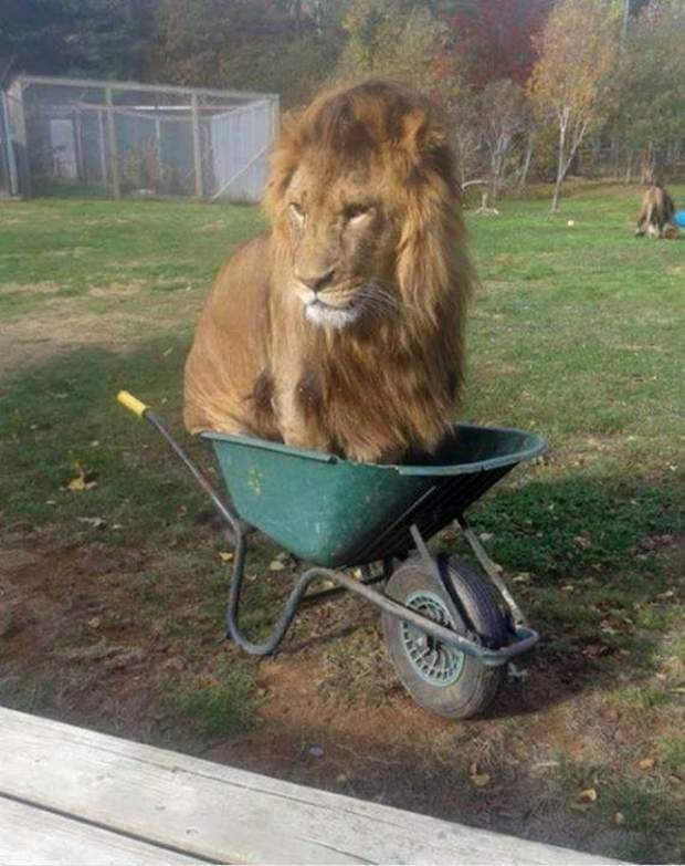 Funny animals of the week - 8 January 2016, funny animal photos, best funny animal, animal picture