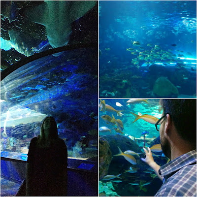 Ripley's Aquarium Toronto