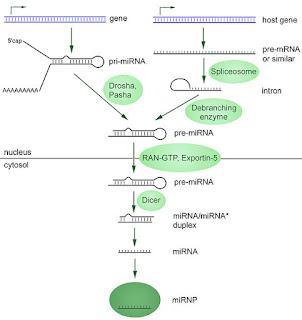 microRNA by Narayanese