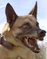 veterinaria rabia en perros