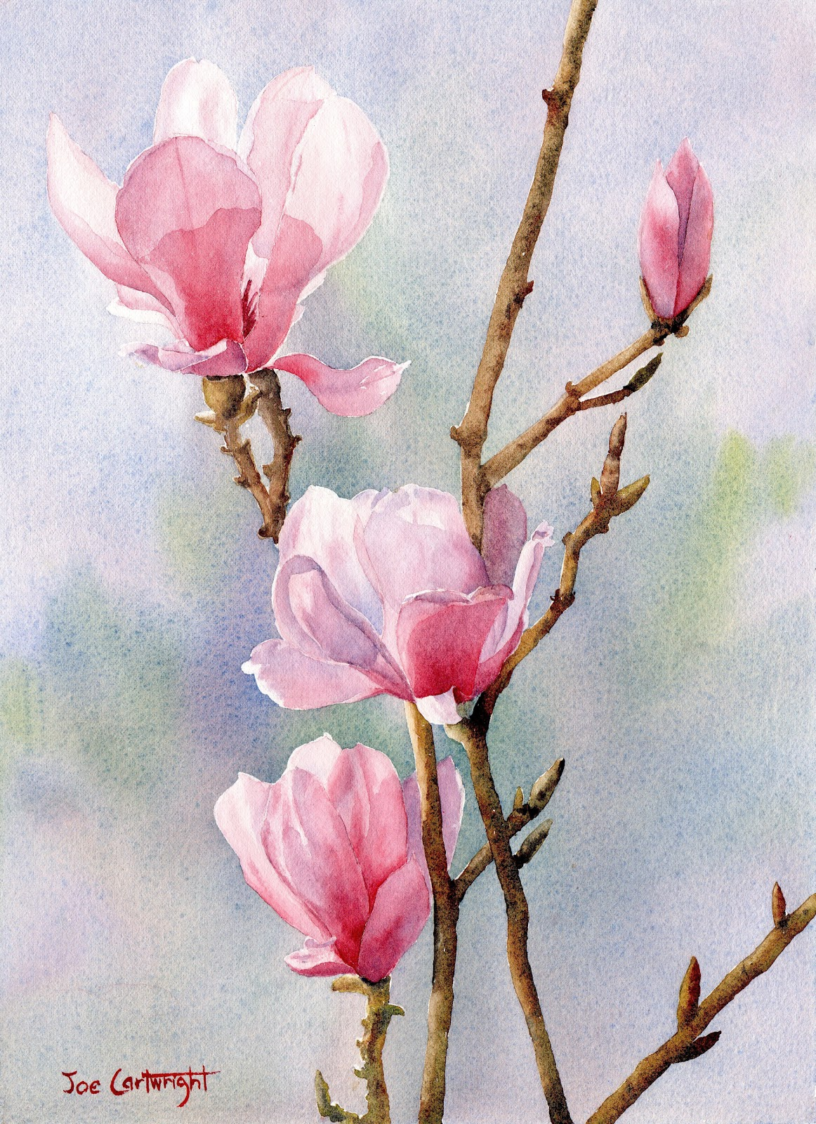 Joe cartwright 39 s watercolor blog pink magnolias for How to paint simple watercolor flowers