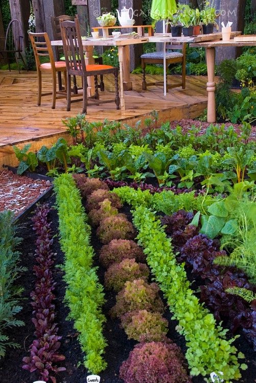 Happy may long weekend for Veggie garden design
