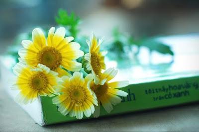 ebook Tôi thấy hoa vàng trên cỏ xanh