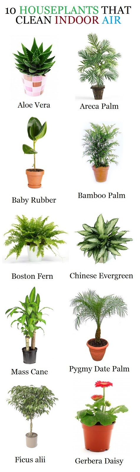 Nasa houseplants clean air page 3 pics about space - House plants indoor ...
