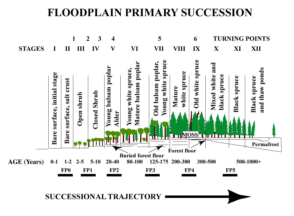 ecological succession Ppt about ecological succession we use your linkedin profile and activity data to personalize ads and to show you more relevant ads.