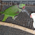Alexandrine Mutations Project: Year 1 (2011)