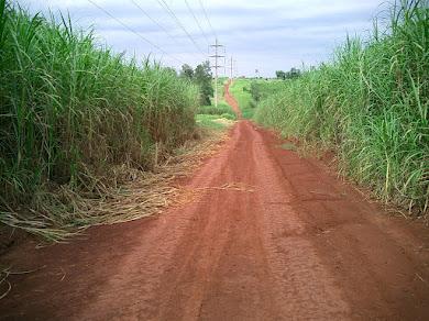 ¿La naturaleza es el camino?