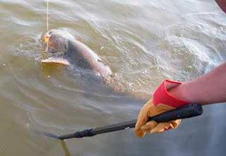 Багорик для рыбалки