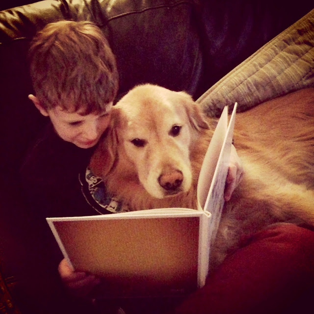 golden retriever reading a book via www.goldenboysandme.com