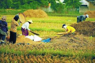 Definisi Produksi Agraris