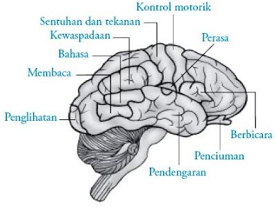 Area asosiasi otak besar