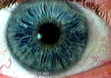 gambar iris mata