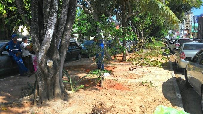 Natal: Paisagismo da Prefeitura manda arrancar árvores da Rodrigues Alves