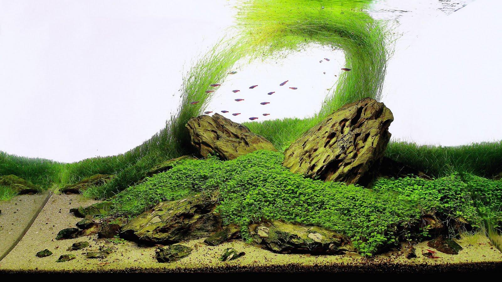 Aquapaisajismo Resultados Iaplc 2011